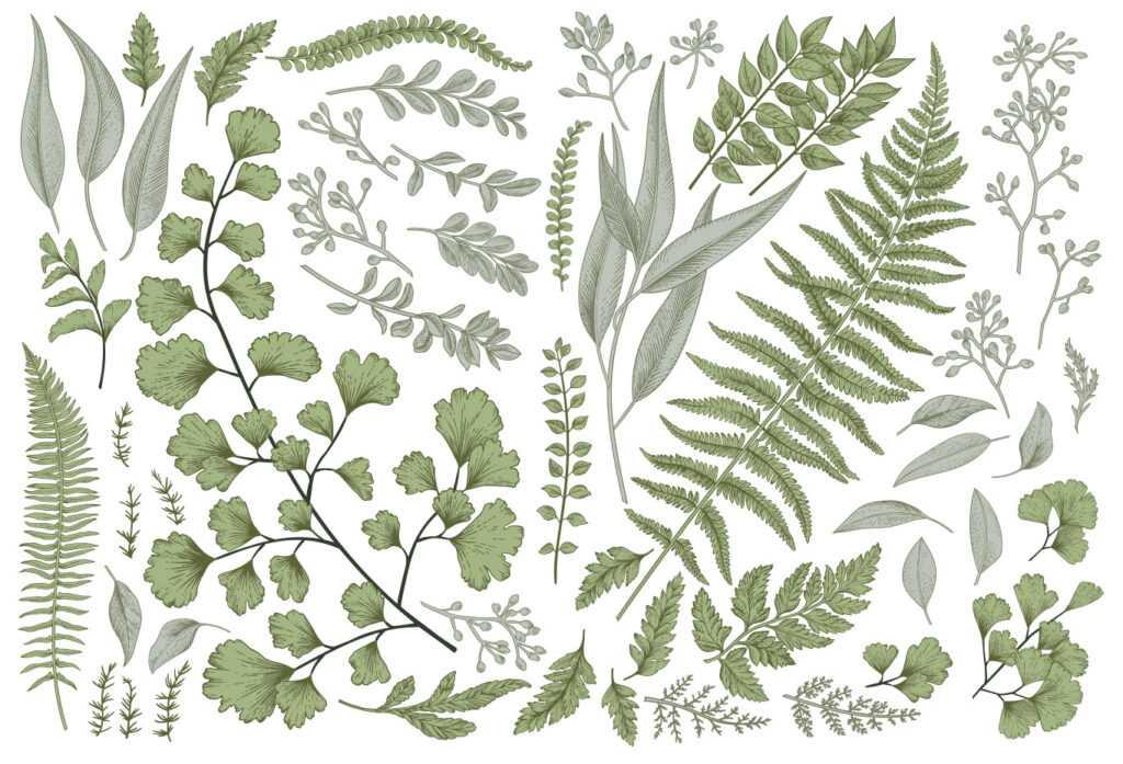 Fiori e piante nelle illustrazioni botaniche