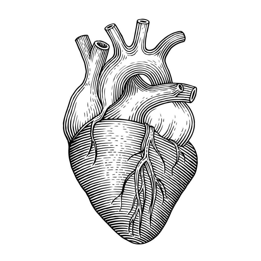 il cuore, un simbolo di amore per la grafica